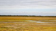 Les Ours de la Baie d'Hudson, en septembre © Etendues Sauvages