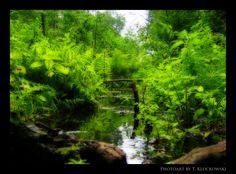 Into the jungle by klocek.deviantart.com