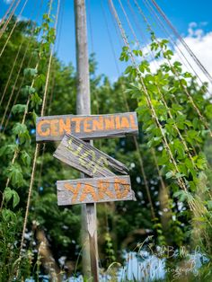 Who doesn't like craft beer? Here's the hops growing at Niagara Oast House Brewers in Niagara On The Lake. The Centennial Hop Yard in Niagara Canada. Some of the best beer in the world. Best Beer, Professional Photographer, Craft Beer, Canada, Wedding Photography, Yard, Patio, House, Terrace