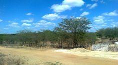 No meio do caminho para Serra Branca. O verde no meio da aridez.
