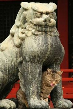 Funny Pictures to make You Smile Crazy Cat Lady, Crazy Cats, Funny Statues, Make You Smile, Illusions, Funny Animals, Funny Pictures, Lion Sculpture, Humor