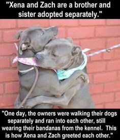 And I'm crying now.... how freaking sweet is this! #pitbull
