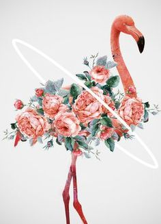 Flamingo - Dániel Taylor - Leinwandbild