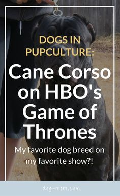 Cane Corso on Game of Thrones, HBO Game of Thrones, Hounds on Game of Thrones, Ramsay Bolton Dogs Italian Cane Corso, Mastiff Dog Breeds, Italian Dogs, Neapolitan Mastiffs, Wild Eyes, Hbo Game Of Thrones, English Mastiff, Small Breed, Exotic Pets