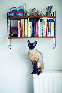 Literary cat by Christofer Falkman