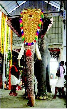 67 Best Elephants Of India Images South India Kerala India Asia