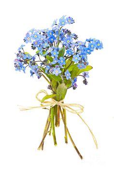 Bouquet Photograph - Bouquet Of Forget-me-nots by Elena Elisseeva