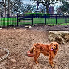 twin cities dog parks