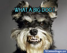 Funny Dogs FB Comment Pictures FbCommentImagescom