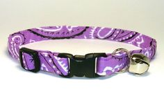 all my dogs have a purple collar