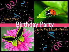 Birthday parties at the Butterfly Pavilion start at $110 for non-members.