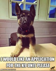 """K-9  Would you consider becoming the head snuggle doggy and best buddy to a """"hooman? """""""