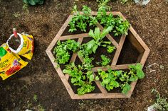Give your yard an upgrade with this easy-to-assemble DIY Hexagon Planter! For more DIYs tune in to Home & Family weekdays at 10a/9c on Hallmark Channel!