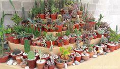 cactus-y-suculentas-tarjetas-imprimibles