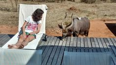 Kudu visiting Villa Blaaskans in South Africa South Africa Holidays, Safari Holidays, Luxury Villa, Countries Of The World, Swimming Pools, Wildlife, Homes, Tips, Animals