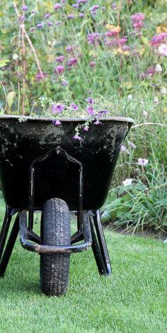 NYT TILTAG - ÅBEN HAVERÅDGIVNING - Free online garden-counseling at HAVEFOLKET.COM