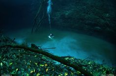 The above referred website link offers some facts to the enthusiastic travelers , who love experiences. The link shares a few of the spectacular images of the popular Cenote Angelita in Mexico's Yucatan Peninsula. Understood as Baby, the location is 0 to  http://www.deepbluediving.org/dive-computer-history/