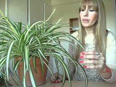 Propiedades de la malamadre | Plantas