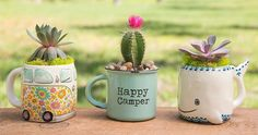 Succulents in mugs make the best gift!