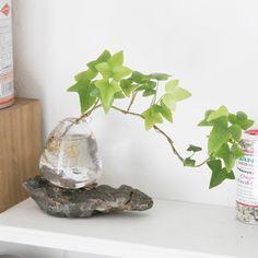Easy To Grow Houseplants Clean the Air Aqua Bonsai Aqua Bonsai - Espace De Vie Bonsa De Tokyo Water Plants Indoor, Aquatic Plants, House Plants Decor, Plant Decor, Easy To Grow Houseplants, Terrarium Plants, Paludarium, Nature Plants, Bonsai Garden