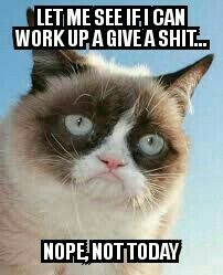 Funny Memes About Work Humor Grumpy Cat Trendy Ideas Grumpy Cat Quotes, Grump Cat, Funny Grumpy Cat Memes, Cat Jokes, Funny Animal Jokes, Cute Funny Animals, Funny Animal Pictures, Animal Memes, Funny Cats