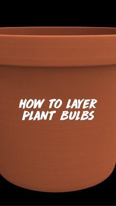 Garden Bulbs, Planting Bulbs, Garden Planters, Container Plants, Container Gardening, Gardening Tips, Bulb Flowers, Flower Pots, Fall Perennials