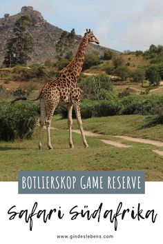 Drive In, Tromso, Private Games, Game Reserve, Travel Companies, Garden Route, Giraffe, Travel Destinations, Places To Go