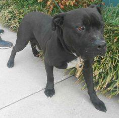 Dogs needing resQ/adoption/fosters/sponsorships... - Grayson County Humane Society/ SPCA