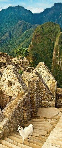 Peru Travel Inspiration - Llama at Machu Picchu, Peru