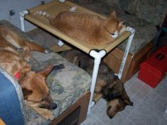 Bunk Beds, 2 Dogs Cots, Cat Bed, Dog Bed, 12 Canvas Colors, 22x30