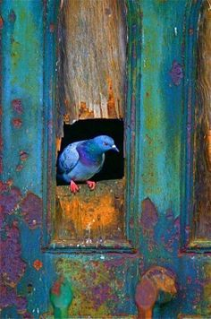 """Beautiful colors popping up again and creative juices are flowing…. """"In order to see birds it is necessary to become a part of the silence. Old Doors, Bird Feathers, Belle Photo, Beautiful Birds, Stunningly Beautiful, Beautiful Pictures, Pet Birds, Color Inspiration, Creative Inspiration"""