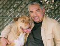 Dog Whisperer Cesar Millan's top dog training tips - Always walk out the door ahead of your dog when leaving the house. This will show your dog who is in the leadership role.