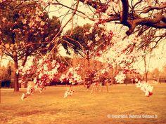 Cherry Blossmon