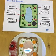 difference between animal cell and plant cell in diagram ...