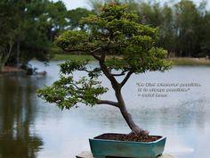 Dali Lama~ Kindness