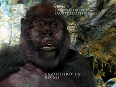 Early Man, The Art of John Bavaro - Illustration Of Early Man, Digital Sculptures Bigfoot Documentary, Bigfoot Sasquatch, Early Humans, Earth Spirit, Human Evolution, Facial, Sculptures, Sign, Website