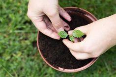 Travaux et semis à effectuer durant le mois de février au jardin