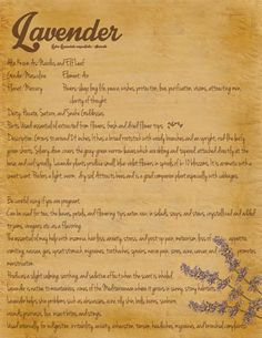 Grimoire Page  Herbs  Lavender by grimmowl on Etsy