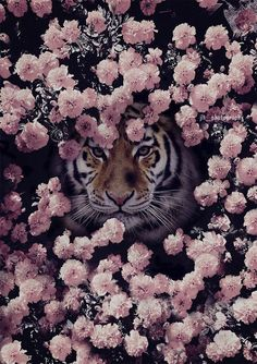 The Tiger. Cute Wallpaper Backgrounds, Animal Wallpaper, Cute Wallpapers, Most Beautiful Animals, Beautiful Creatures, Cute Baby Animals, Animals And Pets, Wild Animals, Jolie Photo