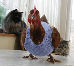 Oh my! I can barely knit a baby sweater, but a chicken needs a sweater too? At least she looks good.