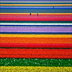Someday.....a trip to Holland to see the tulips!!!
