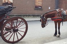 Some veteran carriage drivers say a new crop of young drivers aren't trained and equipped as well as they could be. And the Garda say they have cracked down. Horse Drawn, Cannon, Safety, Guns, Horses, Security Guard, Weapons Guns, Revolvers, Weapons