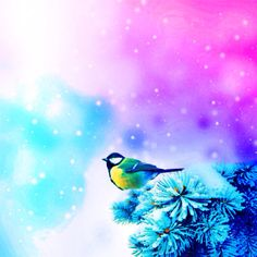 Just added a dream ambience for this photo of a bird. Nothing else, really.
