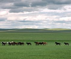 Inner Mongolia, China. the grasslands