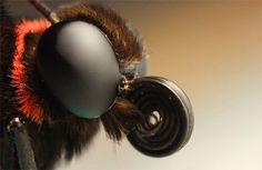 50 fascinantes fotografías en primer plano de mariposas de