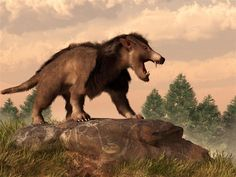 """Prints of this image are for sale here: The latest in my paleoart series is the Arctocyon. Its name means """"bear dog"""" though neither bears nor dogs are that closely related to it. Don't confuse it w..."""