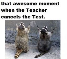that's so funny because every time a teacher cancels a test, raccoons really do appear out of nowhere and glorify God