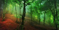 Naturwald © Kilian Schönberger