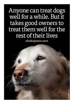 That's why I have a houseful of geriatric dogs. We all deserve love for our whole lives I Love Dogs, Puppy Love, Cute Dogs, Dog Quotes Love, Dog Sayings, Pet Quotes, Animals And Pets, Cute Animals, Dog Rules
