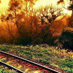 Quando o real e o sonho se juntam Estrada de trem da Serra do Mar em Curitiba - set 2015